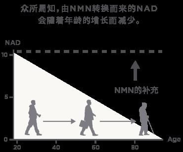 NMN含量