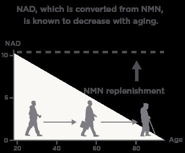NMN content image