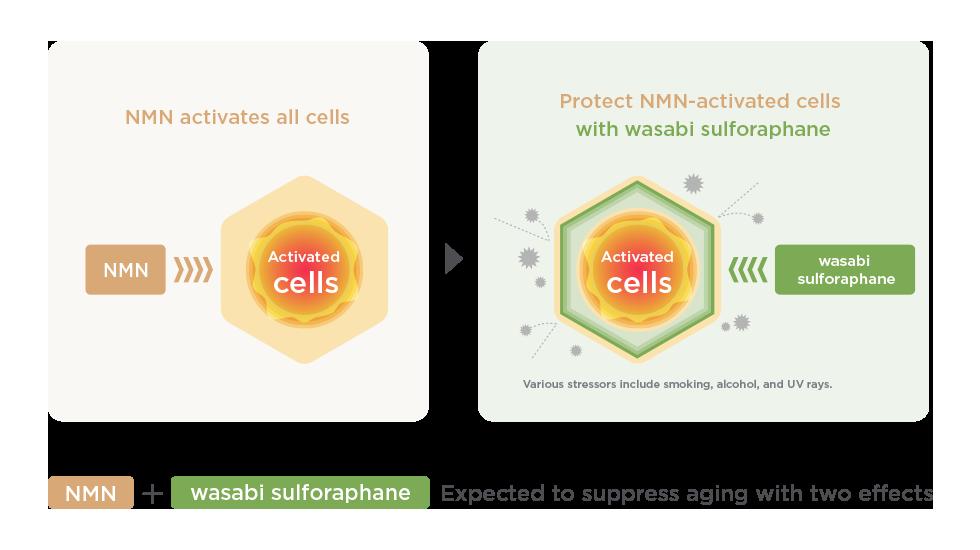 NMNの効能図