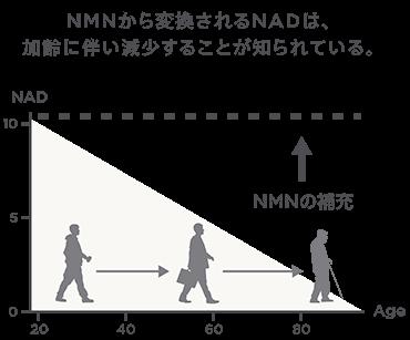 NMN含有量 図