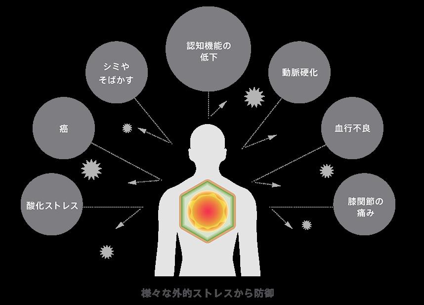わさびスルフォラファンの様々な外的ストレス、脳神経細胞に対する効果 図