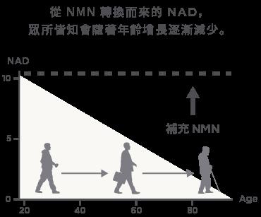 NMN 含有量